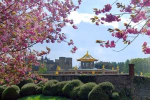 Flores do Templo