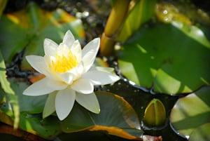Gemas que colman todos los deseos para los practicantes de Dharma